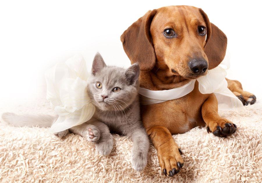 comment-ameliorer-le-systeme-immunitaire-de-votre-animal