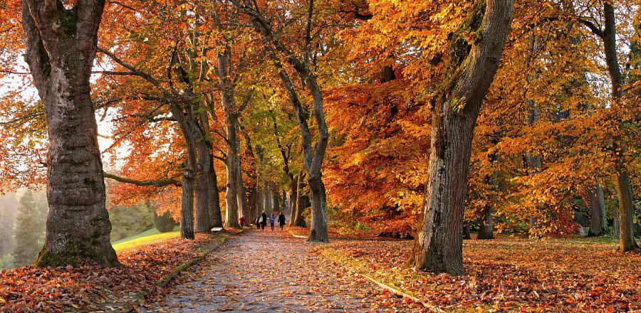 comment-le-changement-de-saison-affecte-vos-articulations