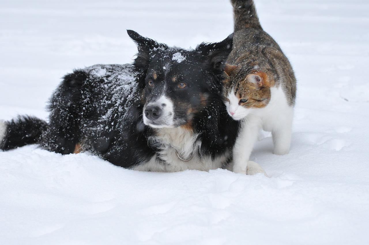 animaux-et-changements-de-saison-prevention-et-bien-etre