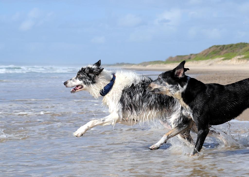 vacances-et-animaux-de-compagnie-quelles-sont-les-solutions