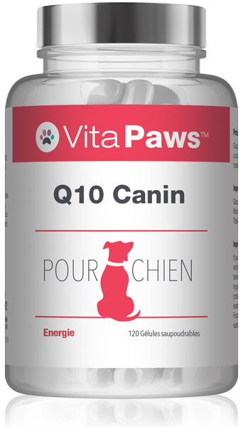 Q10 Canin