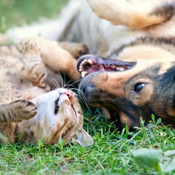 'pouquoi-la-glucosamine-est-elle-importante-pour-les-animaux